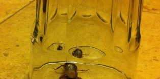 Cockroach found in Best Western Plus Meridian Inn and Suites
