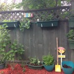 Fence_Garden_Backyard_Landscaping